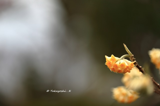 1DX_1336.jpg